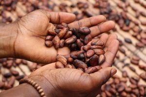Протеинов шоколад 17 - какаови зърна